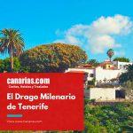 El Drago Milenario de Tenerife