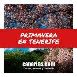 Y por fin llegó la Primavera en Tenerife